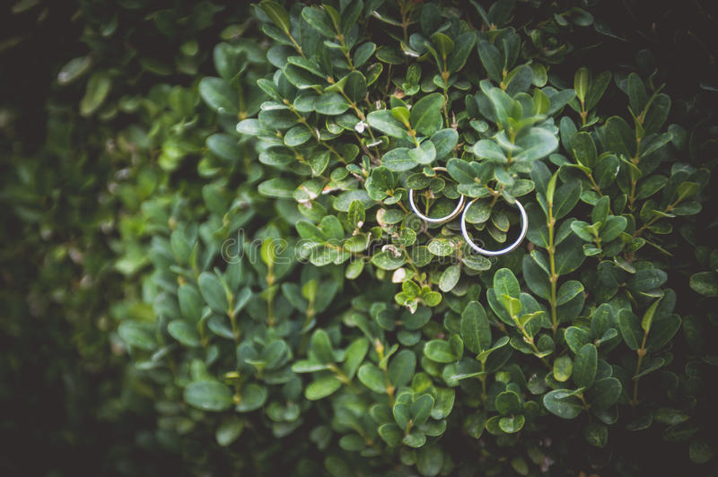 Wedding rings. With green background royalty free stock photos