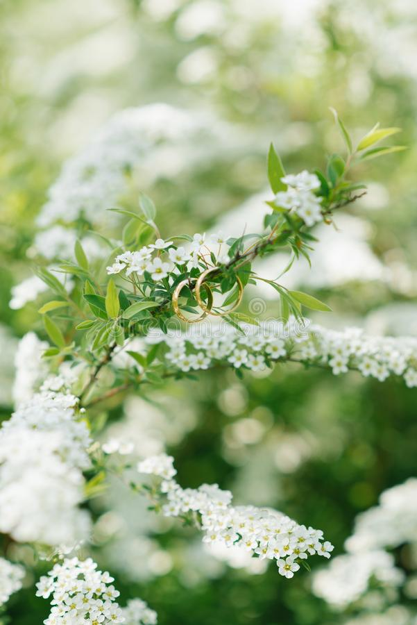 Wedding rings hang on a Bush branch with numerous white flowers in the spring stock photo