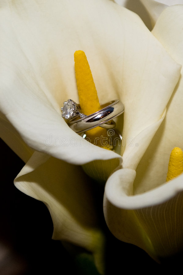 Download Wedding Rings Inside A Calla Lily Stock Image - Image of celebration, plants: 7354095