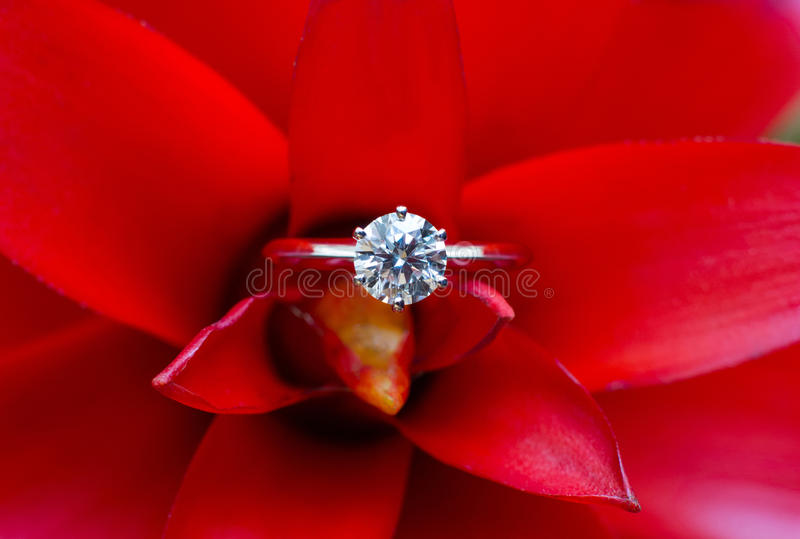 Wedding rings. Isolated on a red flower royalty free stock images