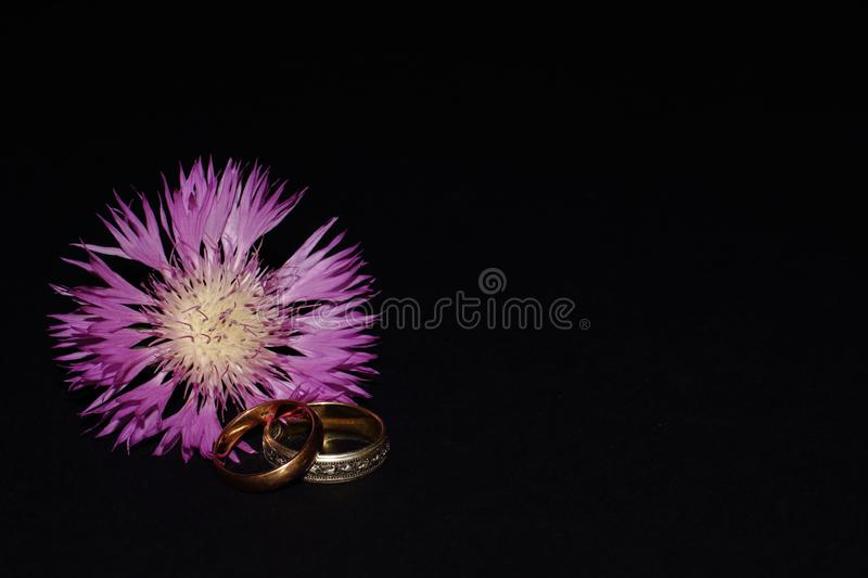 Wedding Rings Composition Stock Image Image Of Gift 59568067