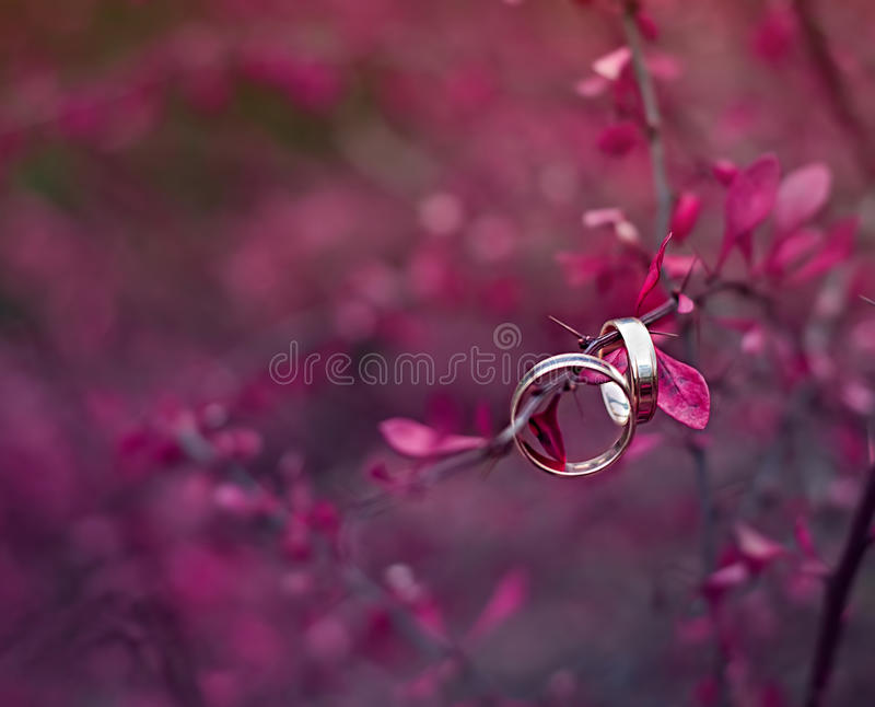 Wedding rings. NOTE: this photo has a very shallow depth of field.  royalty free stock photos