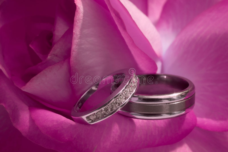 Wedding Rings On Pink Rose stock photos