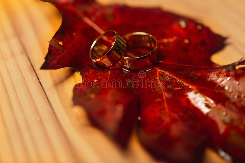 Wedding rings on red leaves with white wood background royalty free stock photos