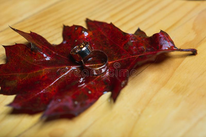 Wedding rings on red leaves with white wood background royalty free stock photography