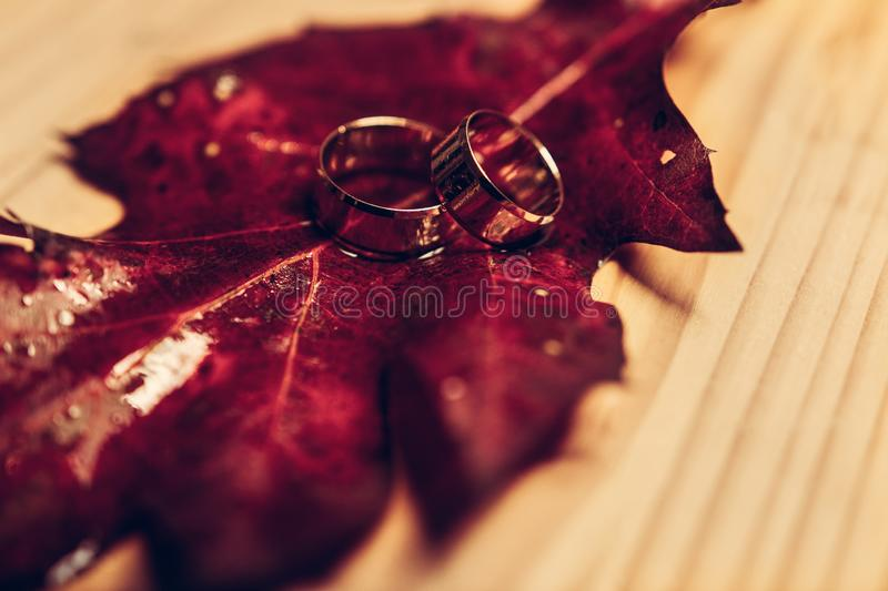 Wedding rings on red leaves with white wood background royalty free stock image