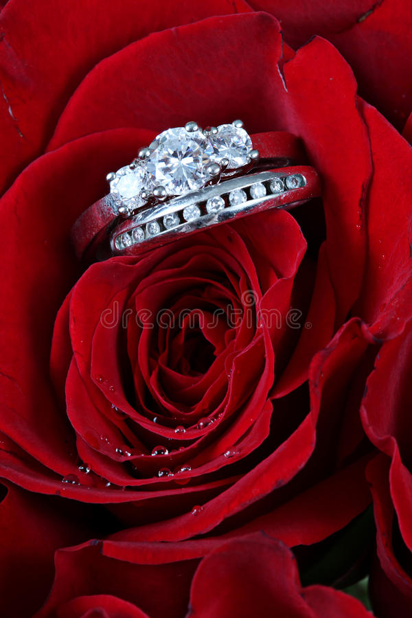 Wedding rings in red rose royalty free stock images