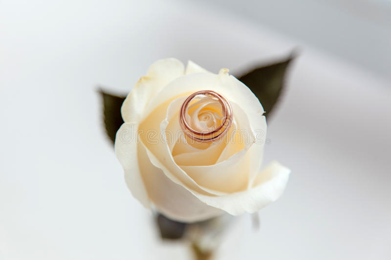 Wedding Rings on the Rose stock photo