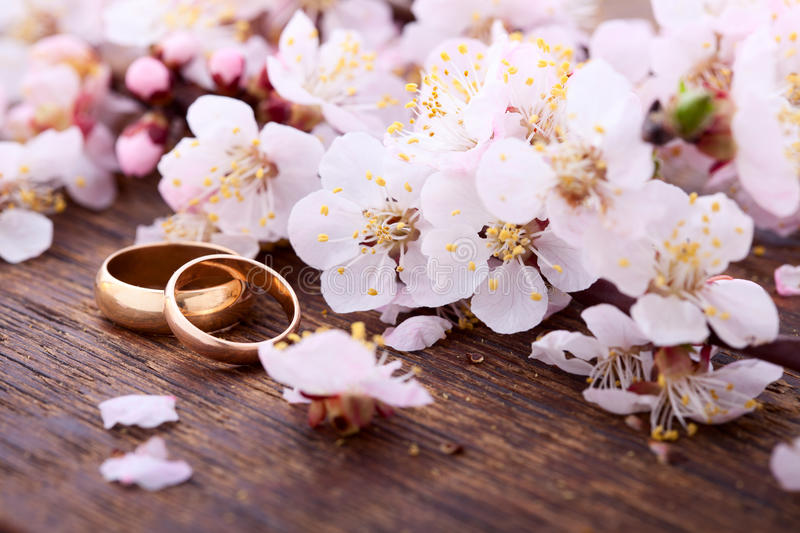 Wedding rings. Spring. Flowering branch on wooden royalty free stock image
