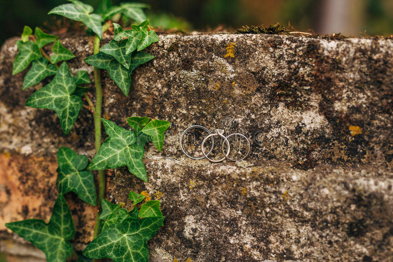 Wedding rings on the stones in the grass. Wedding in Montenegro stock image