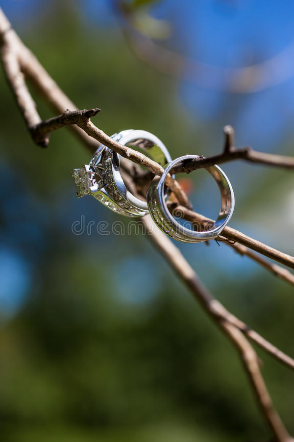 Wedding Rings on Tree Branch stock photography
