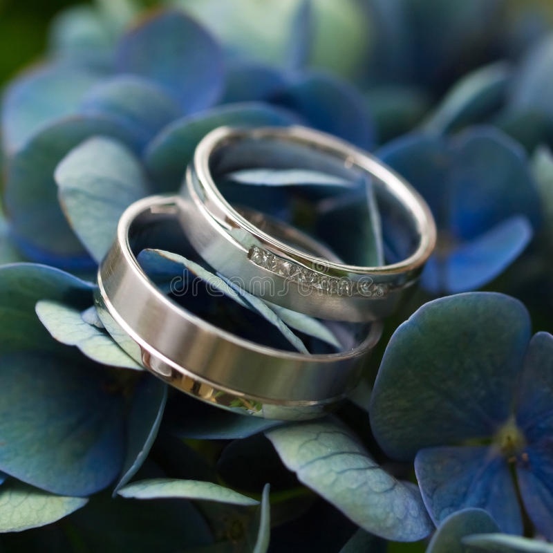 Wedding rings on violet flower stock photography