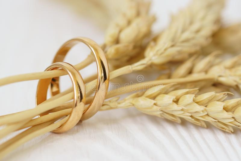 Wedding rings with wheat ears on white wood stock photography