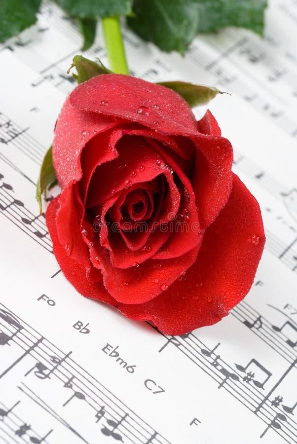 Wedding rose royalty free stock image