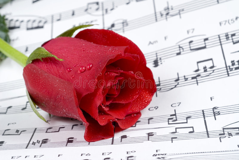 Wedding rose on piano music royalty free stock photos