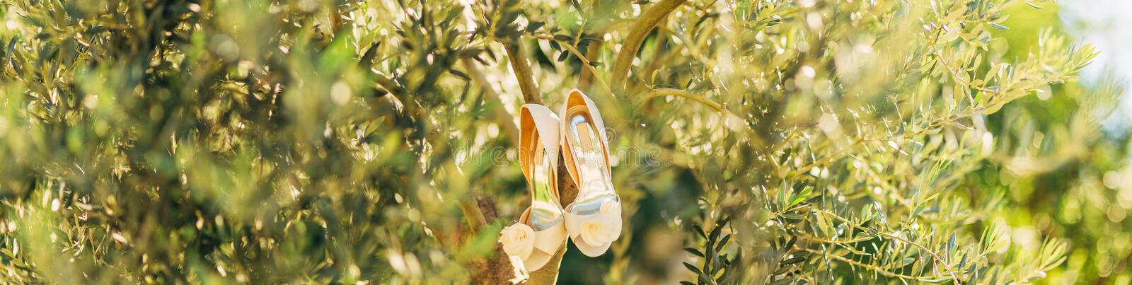 Wedding shoes of the bride hang on a branch of an olive tree stock image