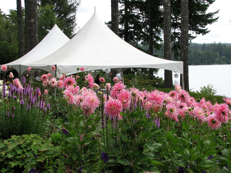Download Wedding Tents stock photo. Image of holiday, ready, outdoors - 3119966