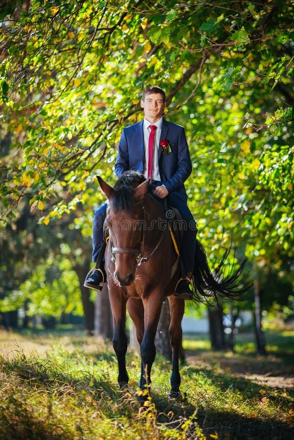 Wedding walk on nature with horses royalty free stock image