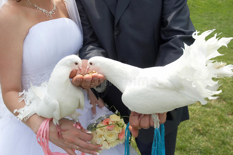 Wedding white pigeons stock photography