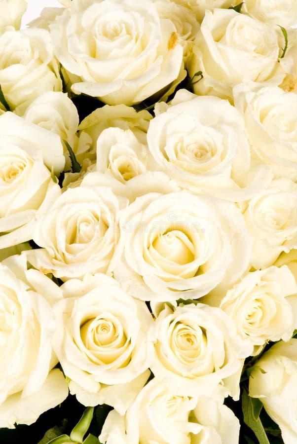 Wedding White Rose Bouquet Royalty Free Stock Photos