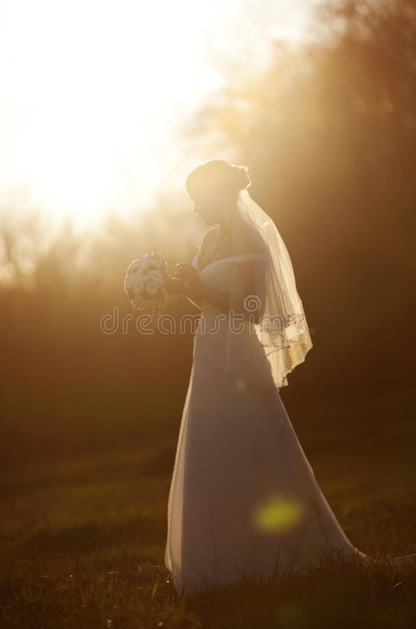 Free Wedding Woman Silhouettes Evening Park Royalty Free Stock Images - 14251839