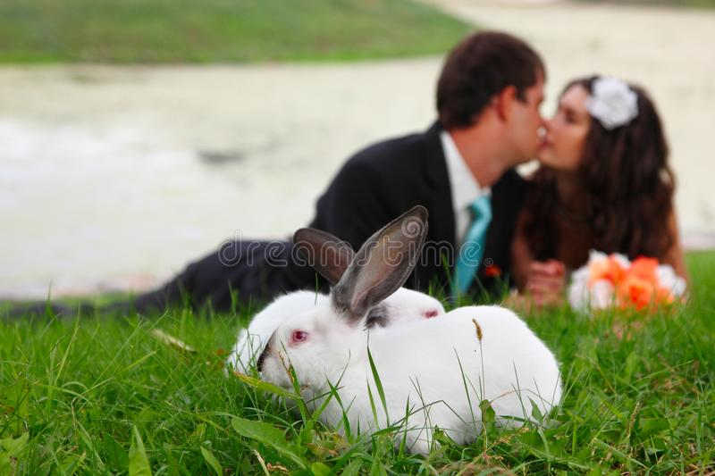 Wedding, young bride kiss groom in love lying on green grass wit. H two rabbits in the foreground, park summer outdoor royalty free stock image