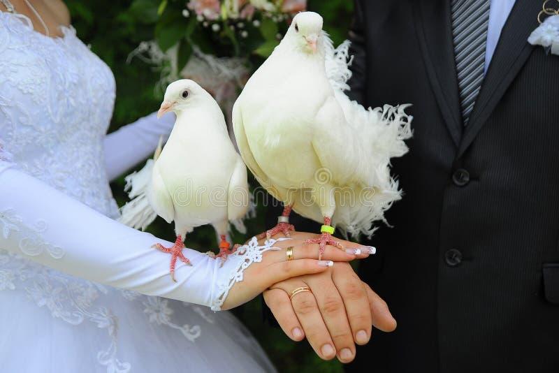 Weddings birds royalty free stock photography