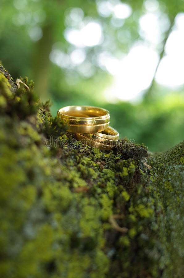 Weddung rings on tree stock photography
