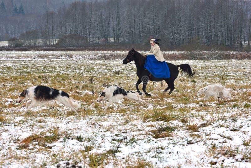 Wederopbouw van de traditionele jacht met Russische wolfshond stock fotografie