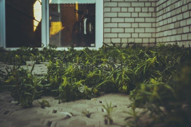 weed image libre de droits