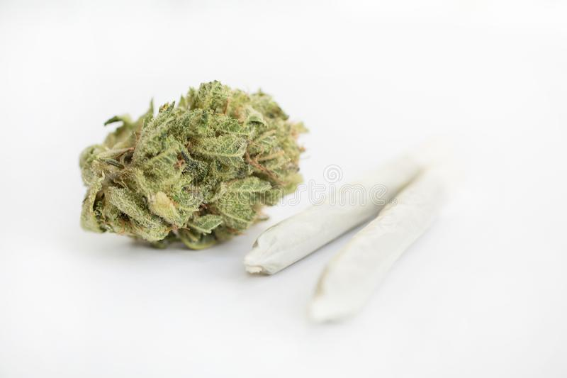 Weed in close up on a white background royalty free stock photography