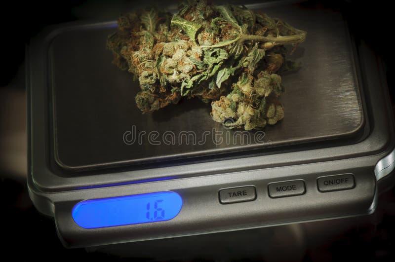 Weed em uma escala da marijuana fotografia de stock