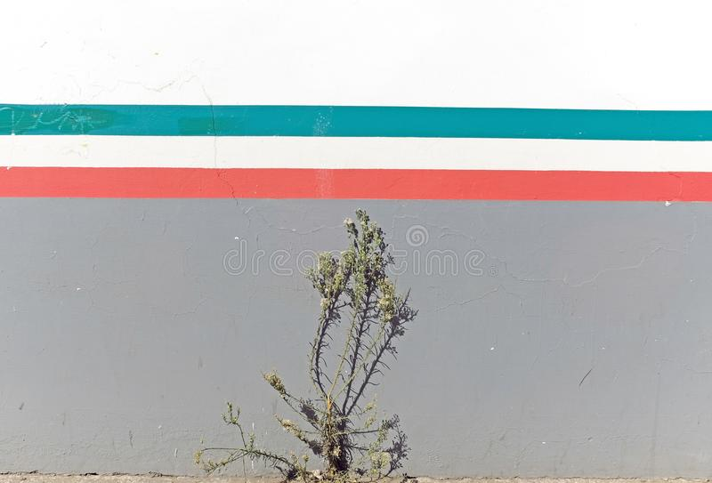 weed grows up a wall painted with the colors of the mexican flag
