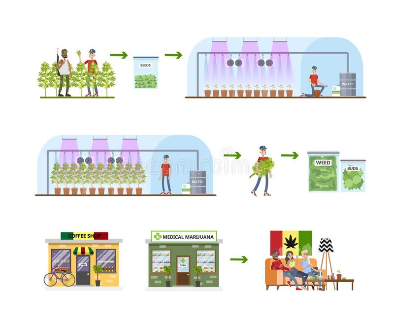 Weed production process. From harvest to the shop vector illustration