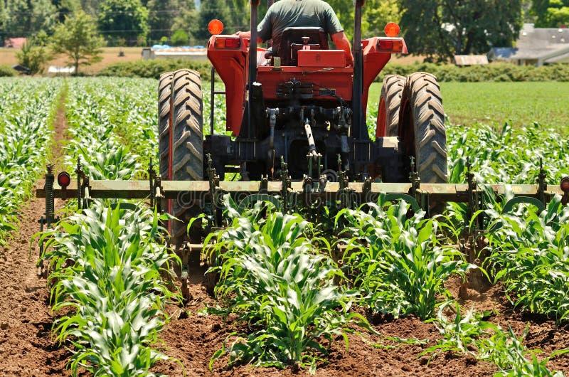 Download Weed Row stock photo. Image of corn, summer, field, harrow - 33428508