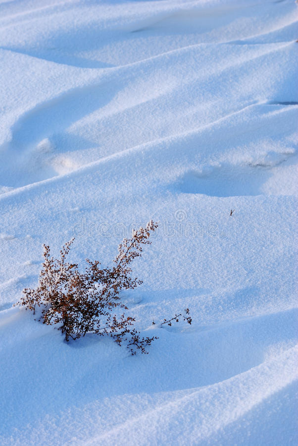 Download Weed on snow field stock image. Image of golden, burdock - 17349565