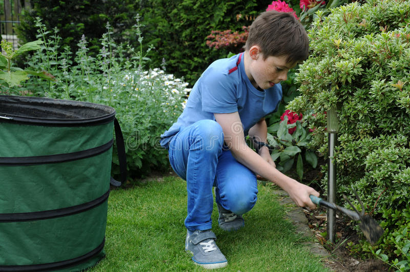 Weeding. Teenager boy weeding the beds in the garden stock images