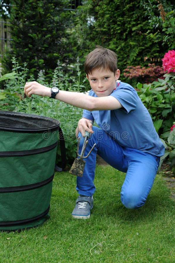 Weeding. Teenager boy weeding the beds in the garden stock photography