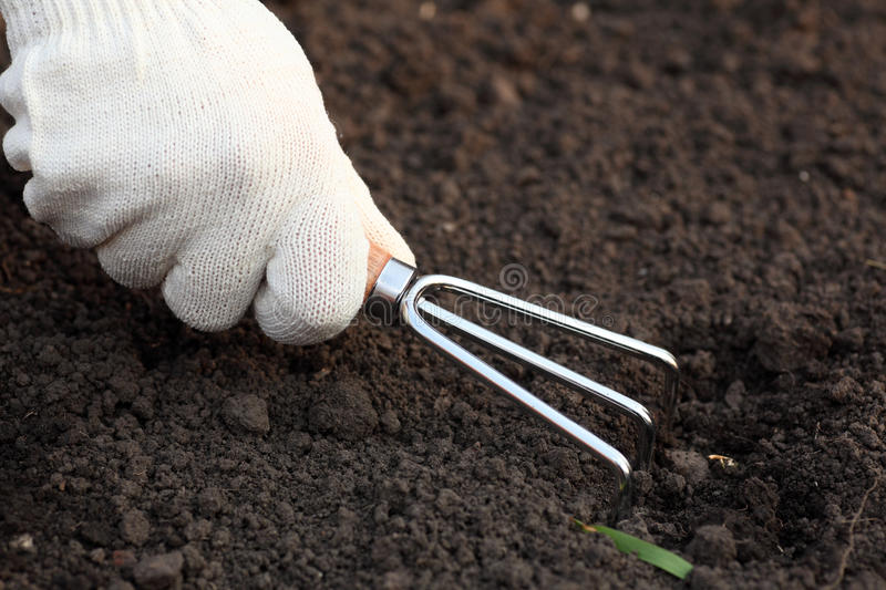 Weeding. Treatment of the ground with a handled garden cultivator. Close-up stock photo