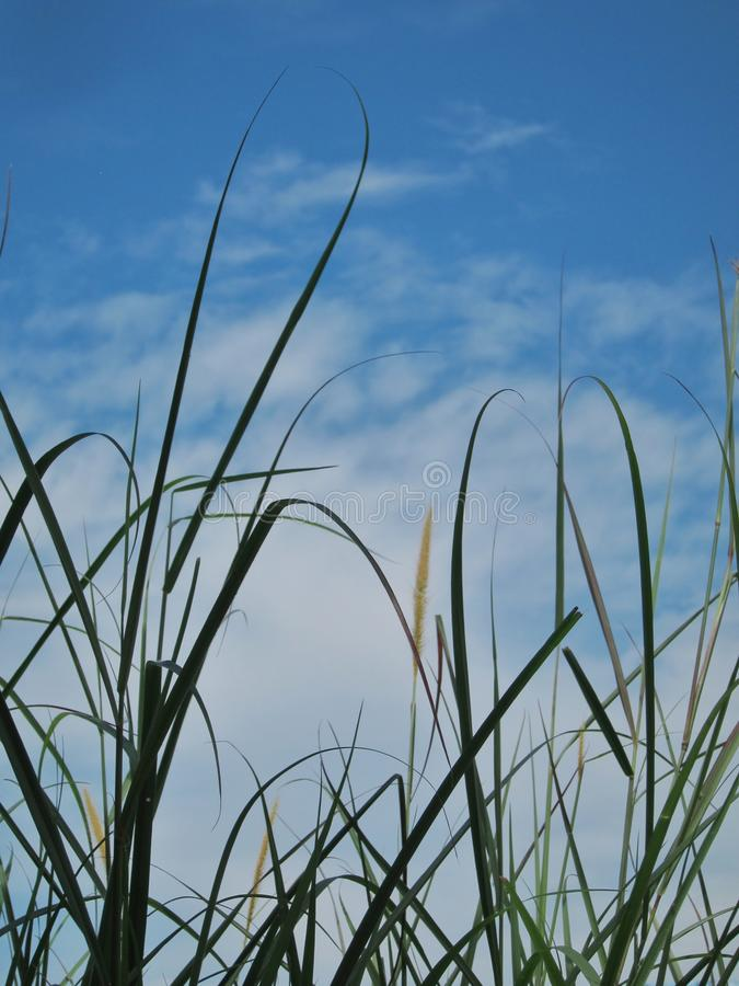 weeds photo stock