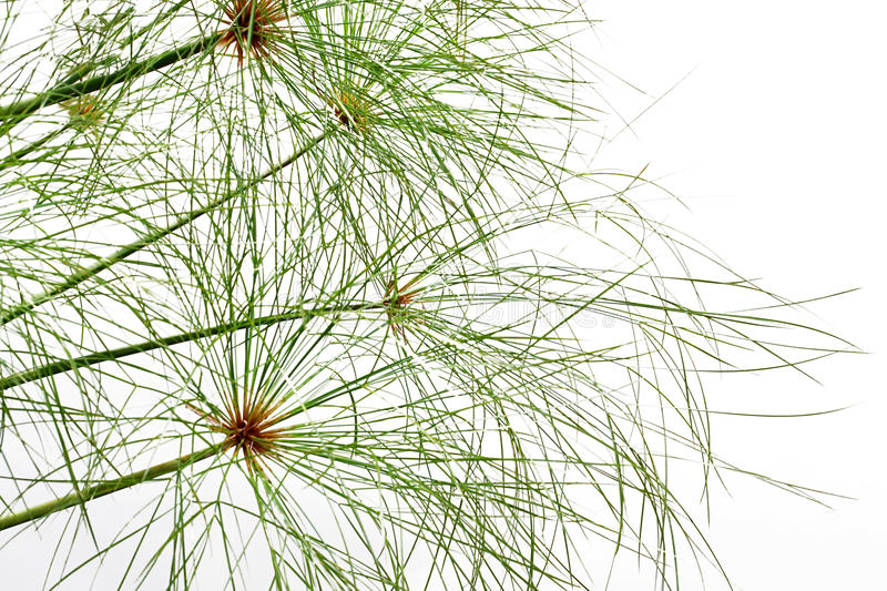 Weeds stock photography