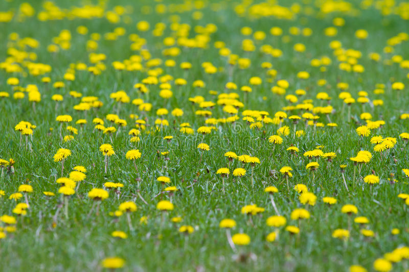 Weeds Royalty Free Stock Images