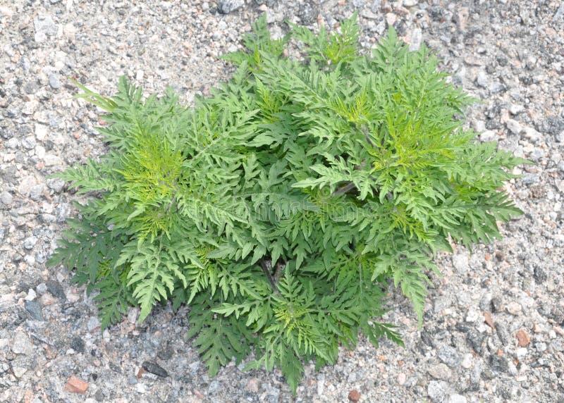 weeds imagenes de archivo