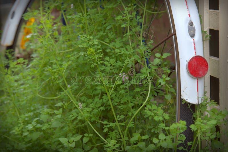 weeds arkivfoto