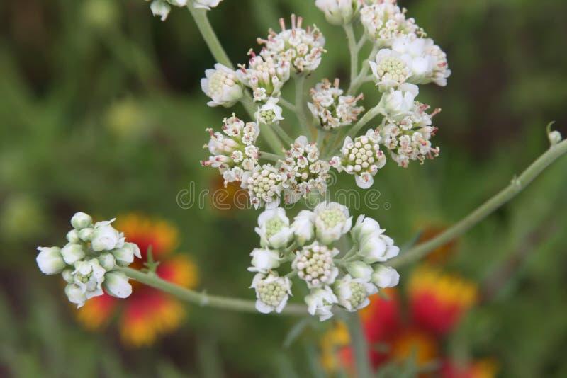 weeds foto de stock