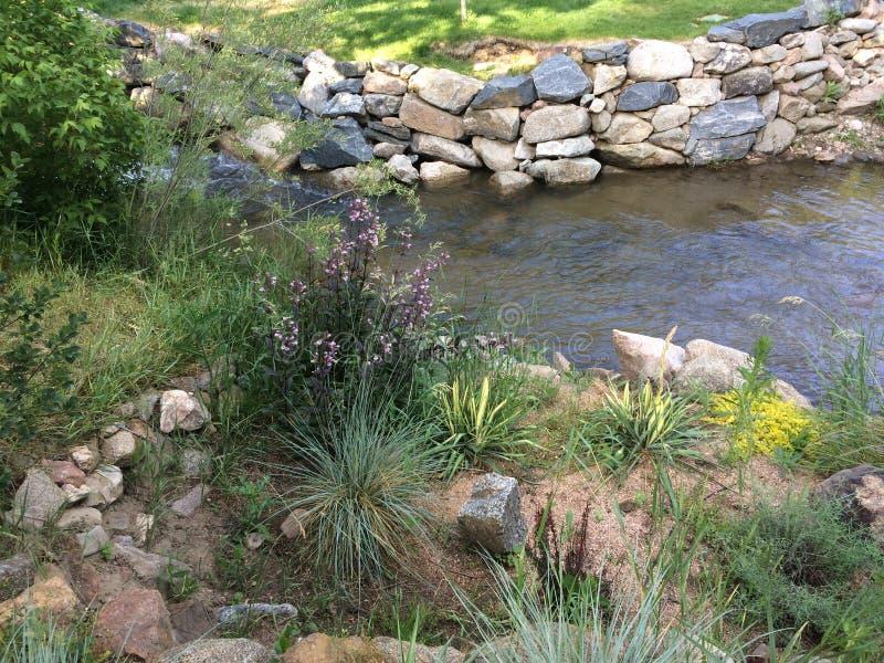 Creekside flowers. Weeds grass rock wall boulders water babbling brook stock photo