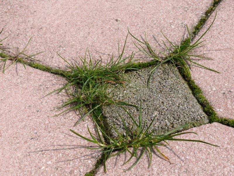 Weeds growing around paving