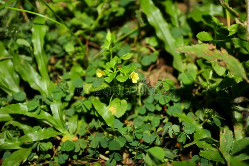 Weeds on the lawn, photographed with focus selection stock images
