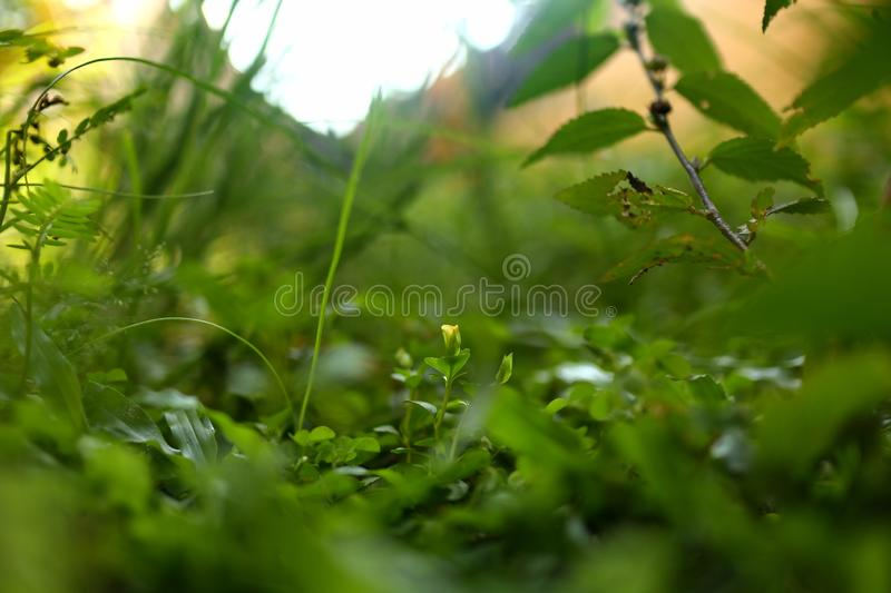 Weeds on the lawn, photographed with focus selection stock photo