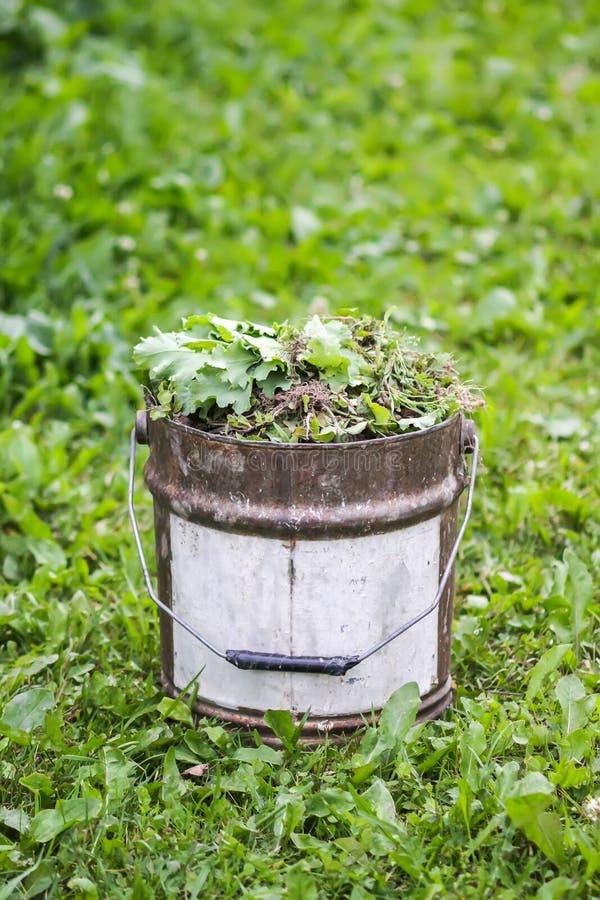 Weeds in metal bucket in kitchen garden royalty free stock photos